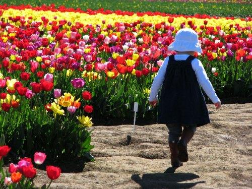 Tulip_girl