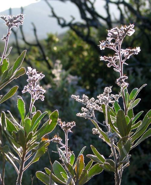 Plant-04(blog)