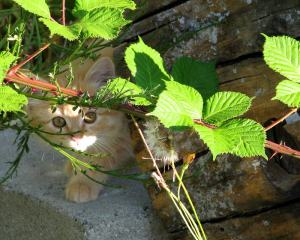 Cat1(blog)