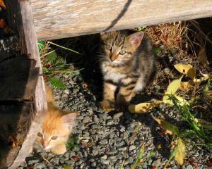 cat2(blog)