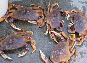 crab1(blog)