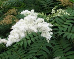 plant1(blog)