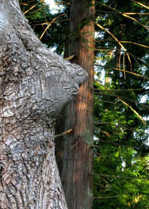 Tree_tits(blog)