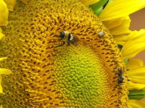 Bees1(blog)