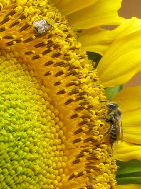 bees2(blog)