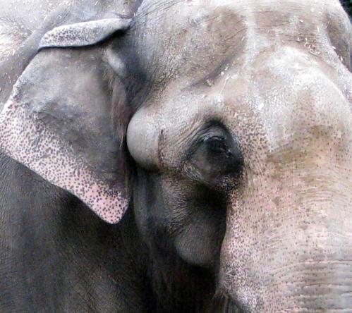 elephant1b(blog)