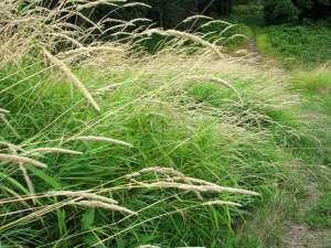 grass1(blog)
