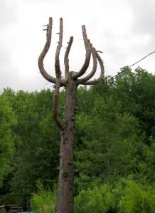 tree9(blog)