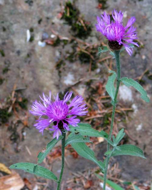 wildflower1(blog)