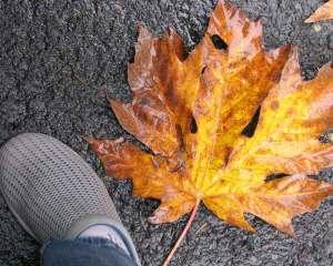 leaf5(blog)