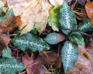 flora1(blog)